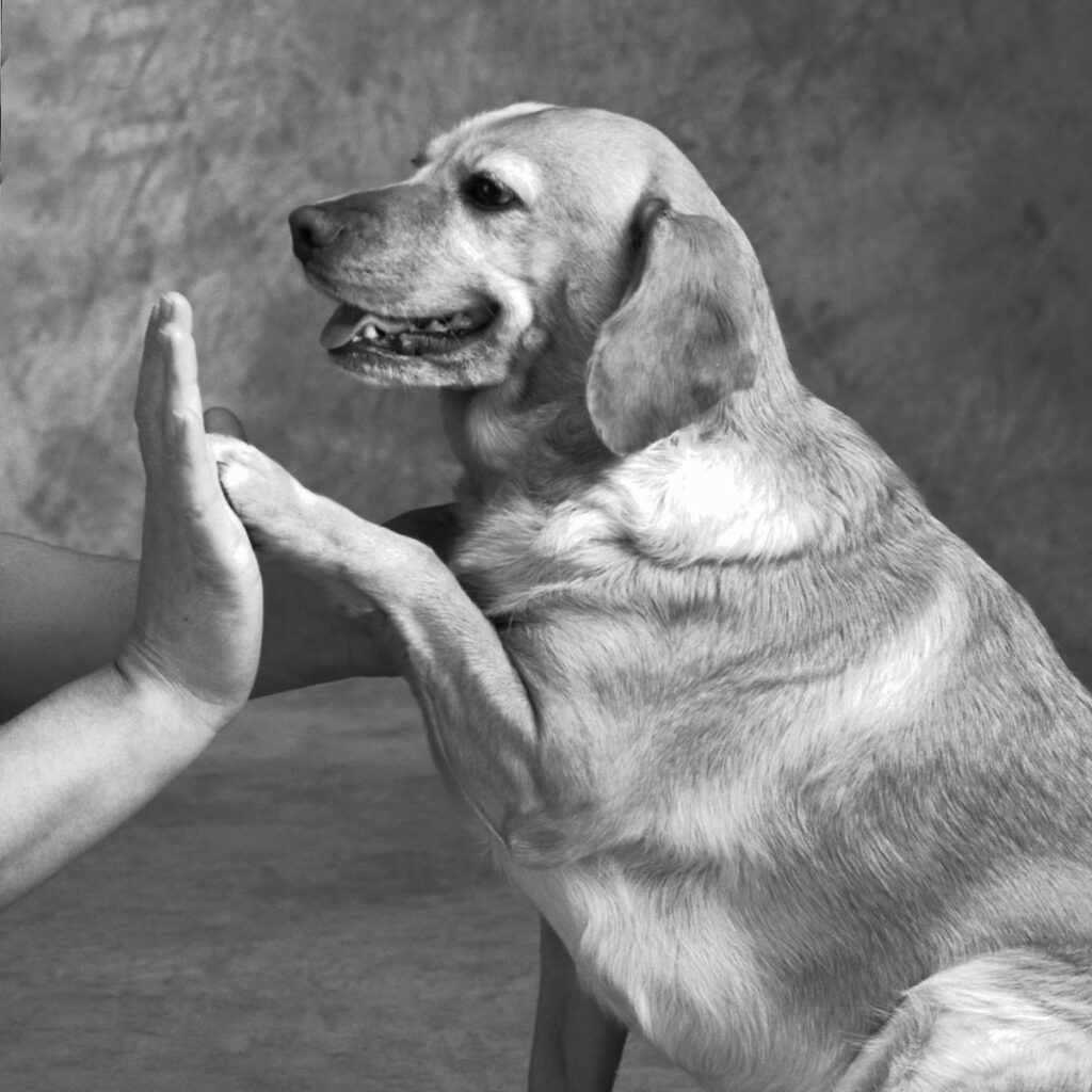Dog touching human hand with paw