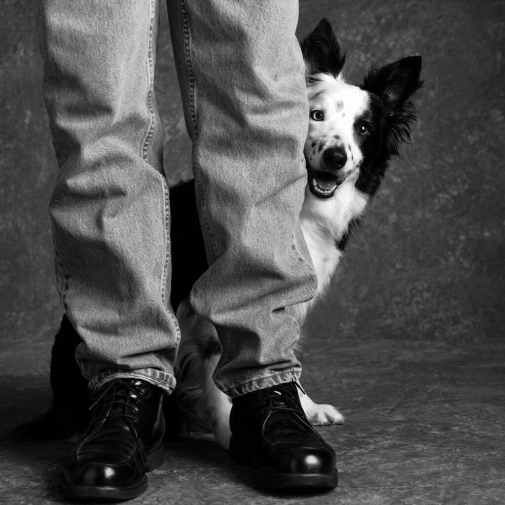 Dog peeking around owner's legs