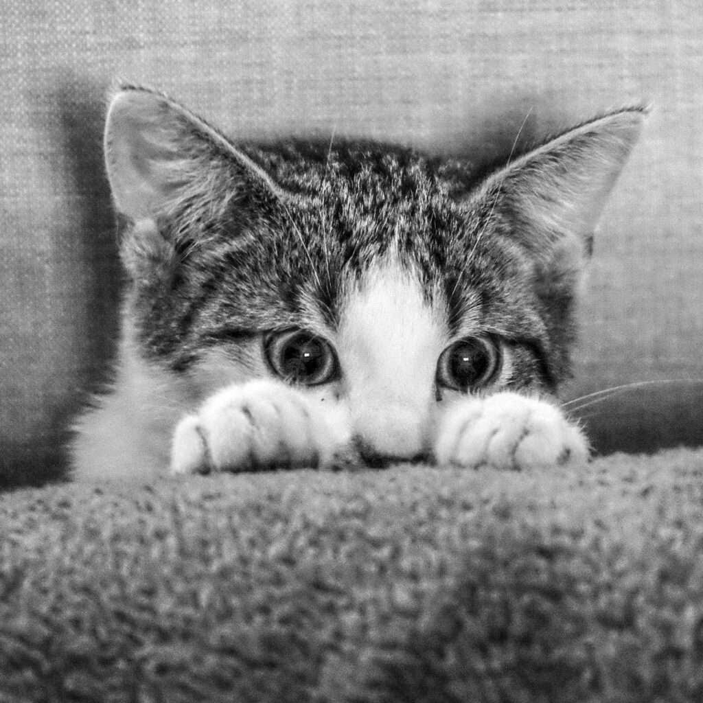 Cat peeking over a pillow