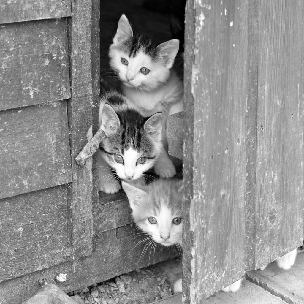 Three kittens looking through a doorway